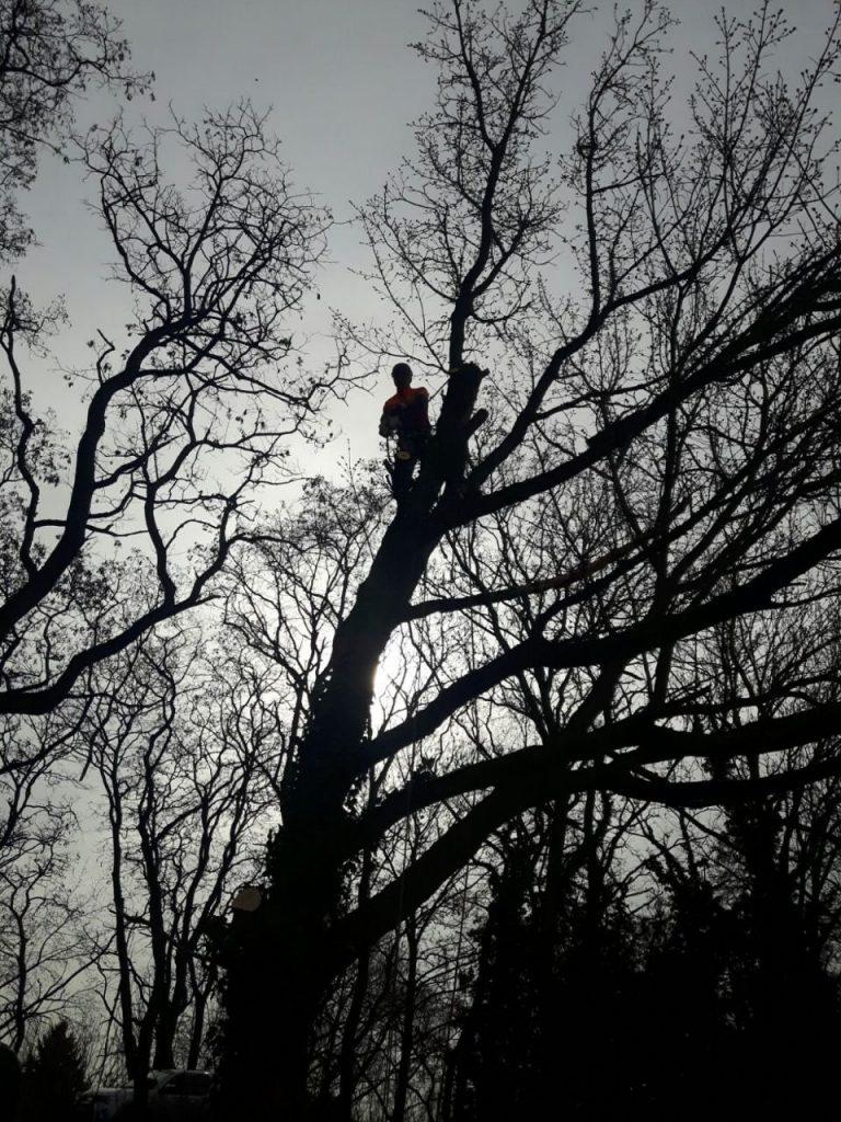 faellung kletter
