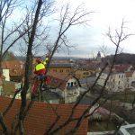 luther high view oak julian