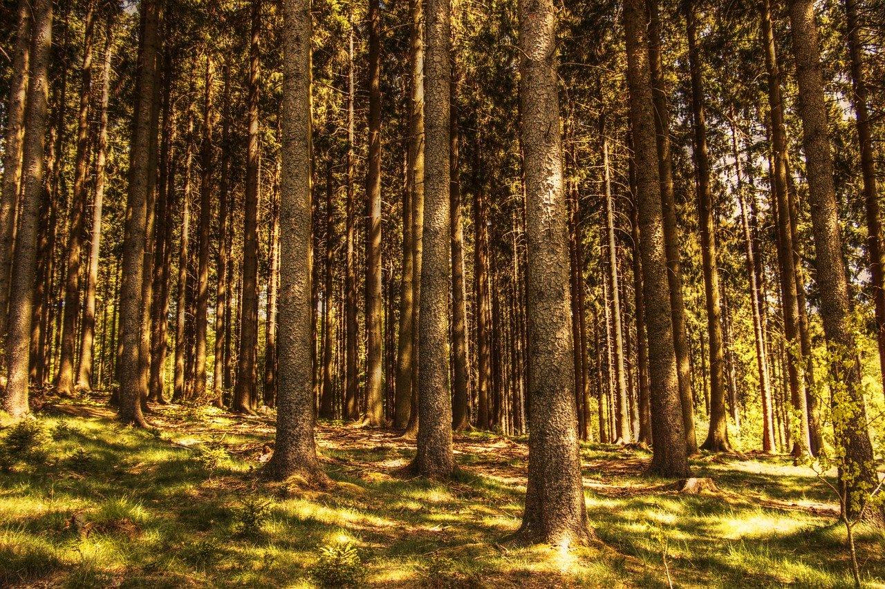 Baumpflege und Gartenbauin Sachsen-AnhaltKlettermaxe Nord