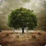 Baum auf gerodeter Fläche, Grün, Leben