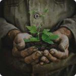 Pflanze in Erde gehalten in Händen Gärtner