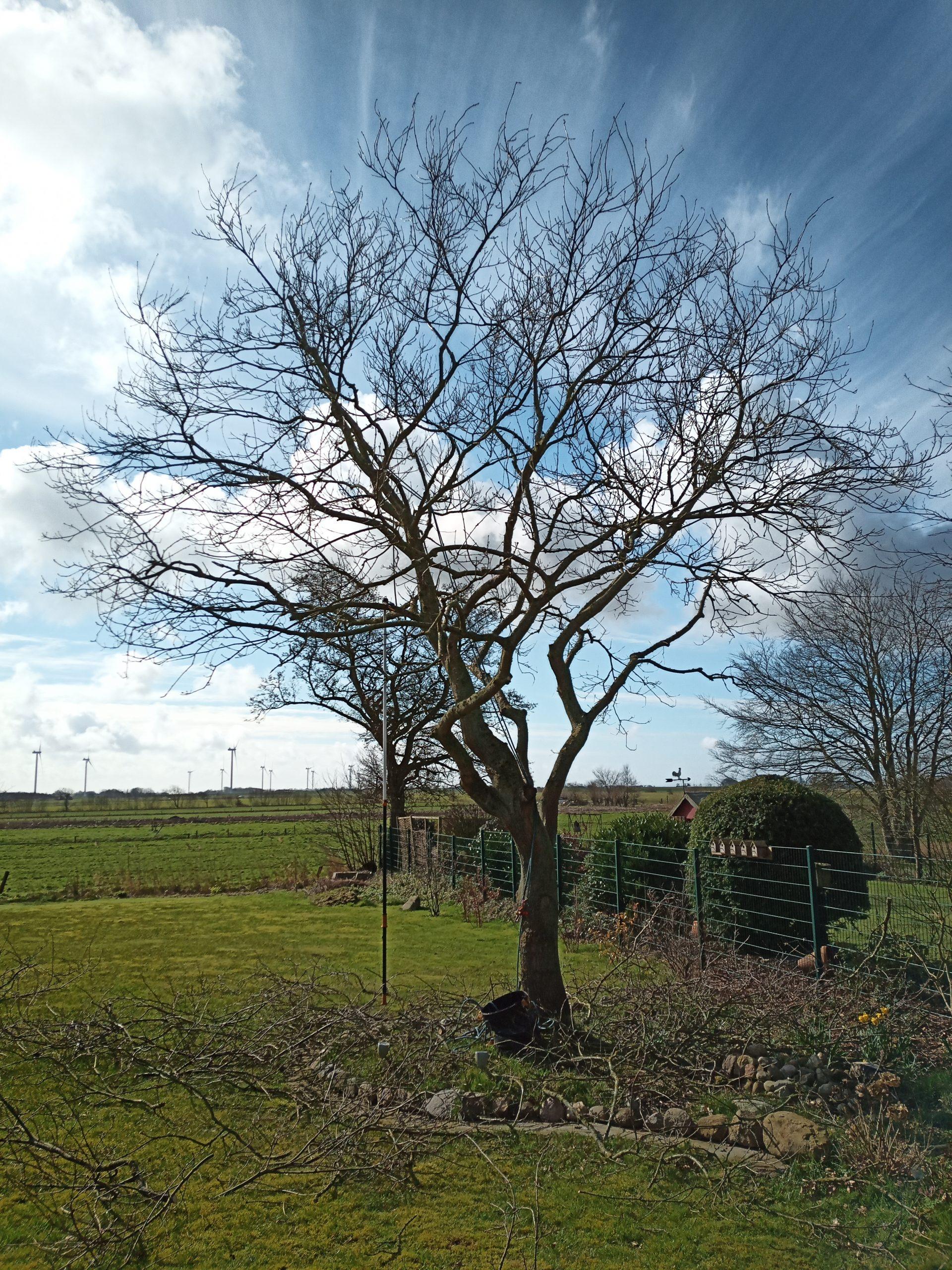 #Baumpflege #Nordfriesland #Husum